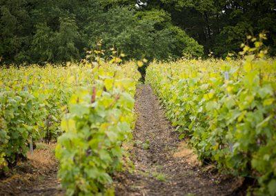 champagne-le-mesnil-sur-oger-091