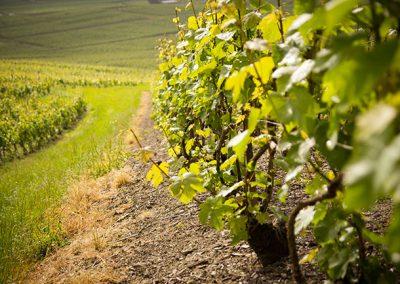champagne-le-mesnil-sur-oger-120-1