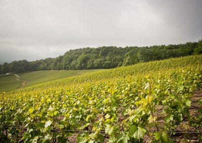 champagne-le-mesnil-sur-oger-123