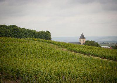champagne-le-mesnil-sur-oger-256