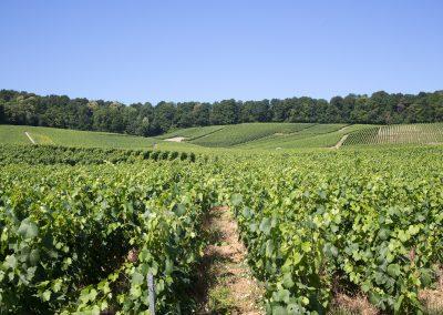 rang-de-vigne-champagne-le-mesnil-oger