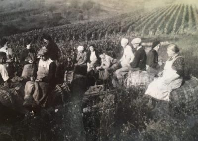 vendanges-champagne-histoire